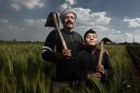 Adel Khedr and his son Ismail at their wheat farm in Tanta. (Jonathan Rashad for The WorldPost)