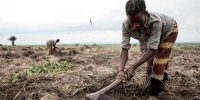 Congolese woman cleans an area of land to start to cultivate crops. JOHN WESSELS/AFP/Getty Images.