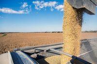 Cosecha de granos de soja en Iowa. Los aranceles chinos causarán un cambio en su demanda. Credit Ryan Donnell para The New York Times