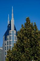 A tree in Riverfront Park competes for grandeur with Nashville's iconic At&T building. Credit Credit William DeShazer for The New York Times