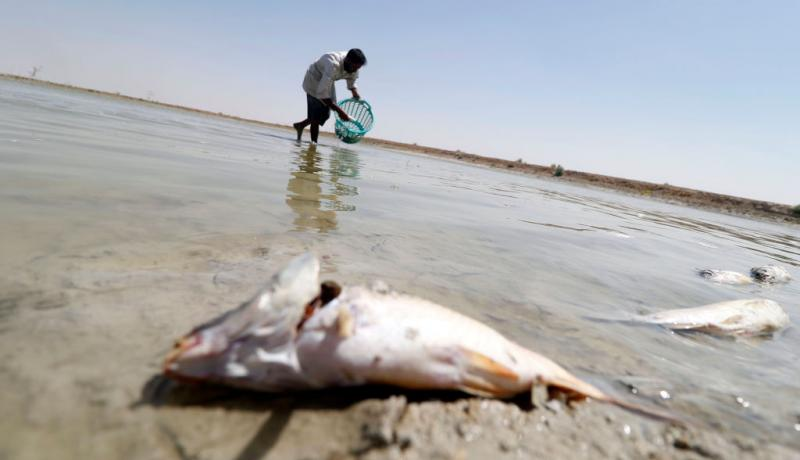 A man collects dead fish from a reservoir at a fish farm north of Basra in August. Photo: Getty Images.