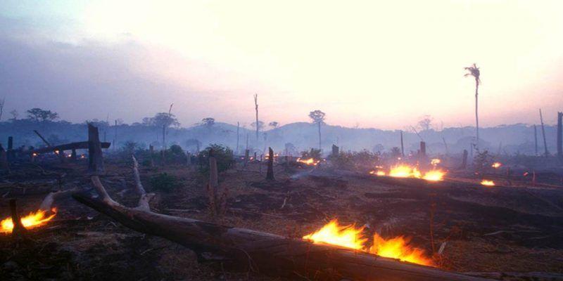 El sombrío destino de la Amazonia