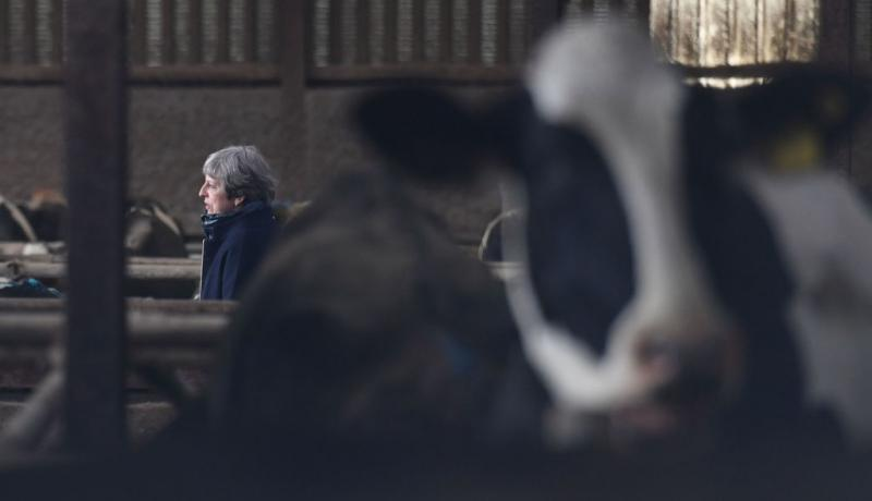 Theresa May visits a farm in Bangor, Northern Ireland. Photo: Getty Images.
