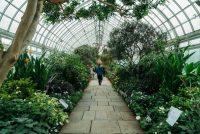 El Invernadero Enid A. Haupt en el Jardín Botánico de Nueva York Credit Charlie Rubin para The New York Times
