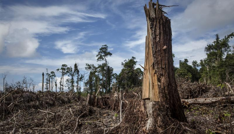 A view of a forest land clearing in South Aceh, Indonesia. Photo: Getty Images