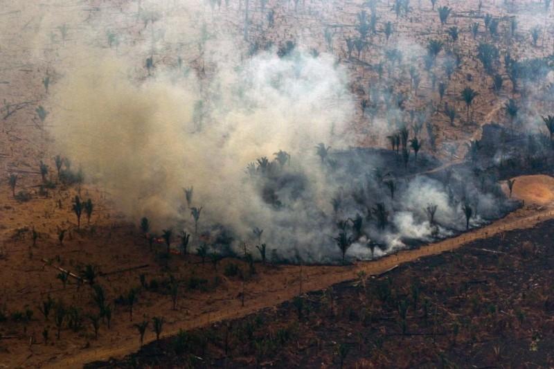 Dans l'Etat d'Amazonas, au Brésil, samedi.Photo Lula Sampaio. AFP