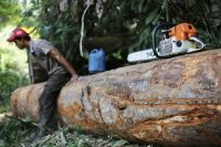 A man hired by loggers takes a break next to his chainsaw in Brazil's Jamanxim National Forest in 2013. (Nacho Doce/Reuters)