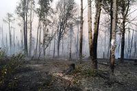 Un bosque de Alaska totalmente calcinado por el fuego, el pasado 18 de agosto. EFE/EPA/MAUREEN CLARK.