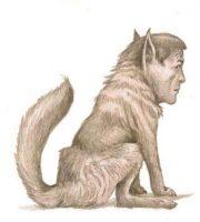 Sánchez o el lobo de Caperucita