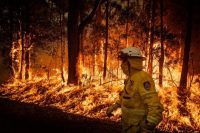 Control burning by volunteer fire fighters along the Princess Highway in Meroo National Park, New South Wales, Australia.Credit...Matthew Abbott for The New York Times