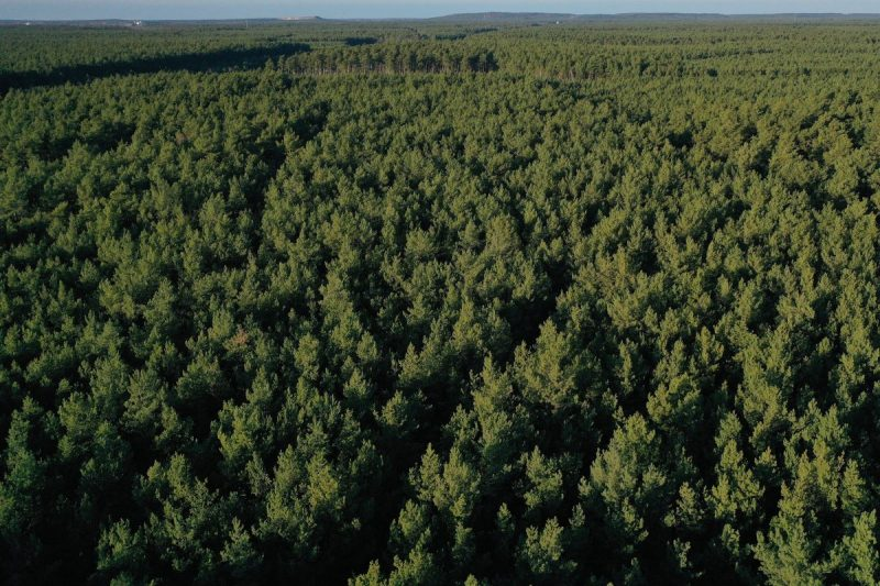 Planting trees, even as many as a trillion, will never absorb the enormous amounts of fossil carbon emitted from industrial societies .Credit Sean Gallup/Getty Images