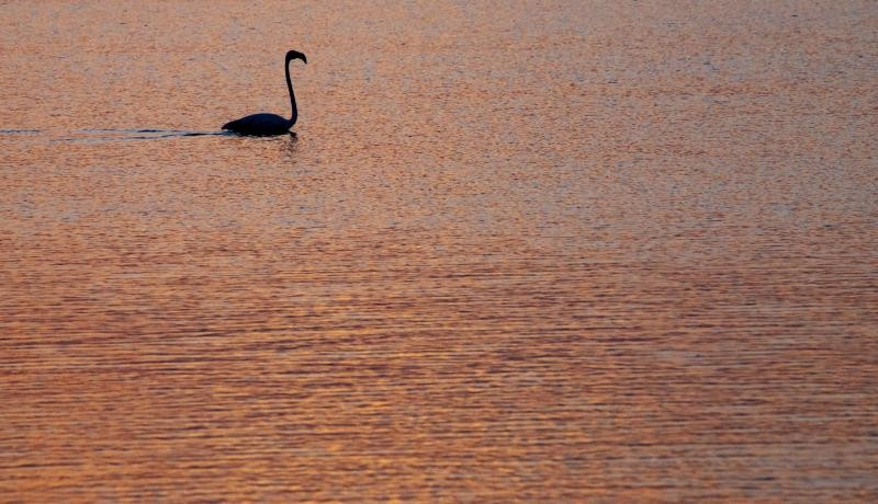 Axios Delta National Park near Thessaloniki in Greece. The park has four rivers and 295 bird species including pelicans, black-winged stilts, ducks and flamingos. The park is protected despite being located next to an industrial zone and the city which has a population of over 1,000,000 people. Photo: Getty Images