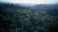 Parte de la sierra de Mayombe, que se extiende por República Democrática del Congo, Gabón y Angola. FAO