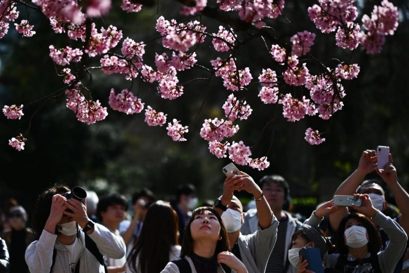 Despite the threat of Covid-19, nature lovers thronged Ueno Park in Tokyo on March 21 to take pictures of the cherry blossoms. Credit Charly Triballeau/Agence France-Presse — Getty Images
