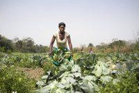 Lo que deja en evidencia la pandemia no es un tema coyuntural, sino esa idea tan arraigada durante los dos últimos siglos de que la alimentación debe ser barata. Sebastian Liste (FAO)