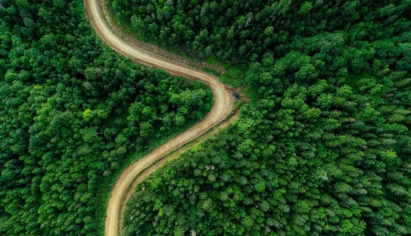 An aerial view of forest area in the Ternei District in Primorye Territory in the far east of Russia located along the country's border with Asia. Photo: Getty Images.
