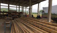 Cómo construir desarrollo sostenible con una hierba gigante