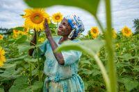 Ketty Okello, de 64 años, cultiva su campo de girasoles, una de sus principales fuentes de ingresos. Uganda, septiembre 2020.Sumy Sadurni / FAO