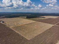 Una plantación de soja en Pará. Credit Victor Moriyama para The New York Times