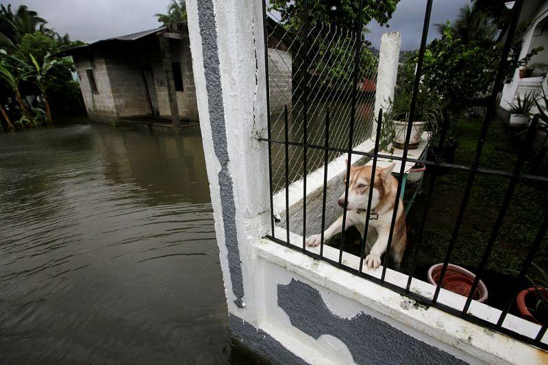 Un perro en una casa afectada por el huracán Eta en Honduras.JORGE CABRERA / Reuters