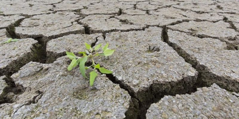 New shoot of a plant in a dried up lake bed caused by prolonged drought. Photo by: Sven-Erik Arndt/Arterra/Universal Images Group via Getty Images.