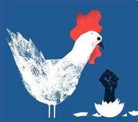Donde solo importan las gallinas oprimidas