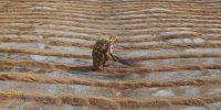 Las mujeres rurales pueden impulsar las recuperaciones verdes