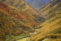 Bosque de Muniellos, en Asturias.getty images
