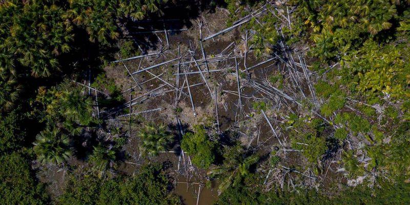 Deforestación cero en la Amazonia en 2030