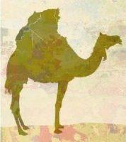 La tragedia del Sahara