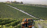 Una máquina cosechadora recolecta uvas en un viñedo de la localidad cordobesa de Montilla.Salas / EFE
