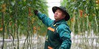 La financiación de un sistema alimentario mundial sostenible